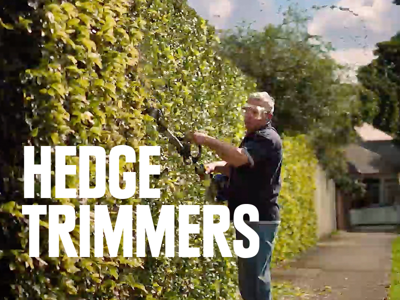 Man using hedge trimmer