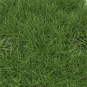 How to Identify Ryegrass Grass